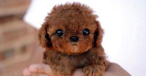 Bästa leksakshunden